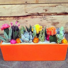 Bring the Outdoors In – Cactus & Succulent Gardens We Love - COWGIRL Magazine