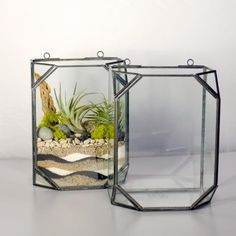 Terrariums: Wall Mount Terrarium - Potted Los Angeles