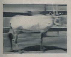 Gerhard Richter, Säbelantilope (Gemsbok) 1965, 40 cm x 50 cm, Oil on canvas