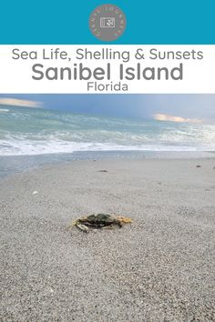 Florida Travel Guide, Usa Travel Guide, Travel Usa, Travel Guides, Travel Tips, Places To Travel, Travel Destinations, Beach Vacations, Family Vacations