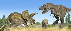 Could Triceratops beat Tyrannosaurus Rex in one-on-one combat? How about Allosaurus vs. Stegosaurus, or Megalodon vs. Here are blow-by-blow descriptions of 10 prehistoric title fights. Shark Drawing, Dinosaur Drawing, Megaladon Shark, Whatsoever Things Are Lovely, Dinosaur Pictures, Megalodon, Prehistoric Creatures, Tyrannosaurus Rex, T Rex
