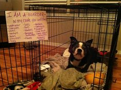 Hello, my name is Maggie and I'm a hoarder. #dog shaming