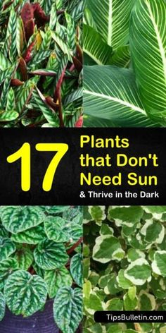 Discover the best plants that dont need sun for indoor planting and for your yards. Our guide shows you the top perennials and other drought tolerant plants for low lights and shades. Find the best flower plants for low sunlight and water. Shade Garden Plants, Indoor Flowering Plants, Best Indoor Plants, Sun Plants, Indoor Flowers, Water Plants, Cool Plants, Outdoor Plants, Plants For Balcony