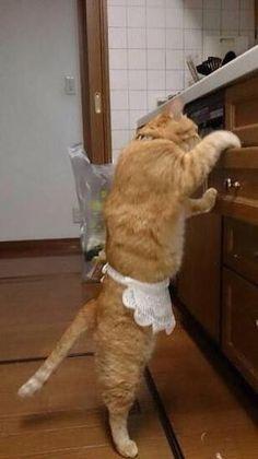 家政婦猫村ねこ, ネコムライス作りまっす!→きょうの猫村さん by ほしよりこ