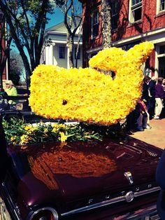 natucket festival | Nantucket Daffodil Festival