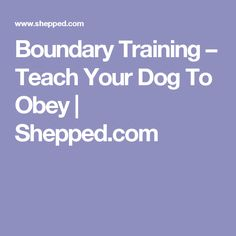 Boundary Training – Teach Your Dog To Obey | Shepped.com