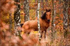 Beautiful Fall in Photos (44 pics) - Picture #38 - Izismile.com