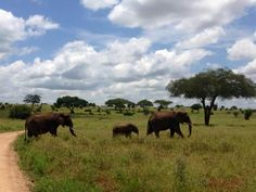 The Ivory Orphans elephant orphanage is set to open in Tanzania, beginning construction on June 1st.