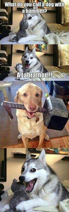 What do you call a dog with a hammer? - Funny Husky Meme - Funny Husky Quote - Top 30 Funny Marvel Avengers Memes The post What do you call a dog with a hammer? appeared first on Gag Dad. Dogs Funny Husky, Funny Dog Jokes, Funny Animal Quotes, Dog Memes, Stupid Funny Memes, Funny Relatable Memes, Funny Quotes, Funny Humor, Pun Husky