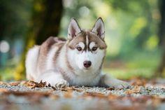 By Dora Levstek. Greenland Dog, Icelandic Sheepdog, All Types Of Dogs, German Spitz, American Akita, Japanese Spitz, Alaskan Malamute, Samoyed, Pomeranian
