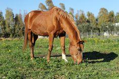 Tiffani - la legenda del circolo, è stata il primo cavallo per quasi tutti gli allievi, e tranquilla, buona e molto paziente.