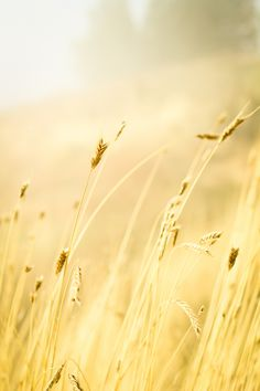 wheat-926924-print.jpg (800×1200)