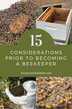How To Start Beekeeping, Beekeeping For Beginners, Save The Bees, How To Keep Bees, Raising Bees, Raising Chickens, Backyard Beekeeping, Backyard Chickens, Farm Gardens