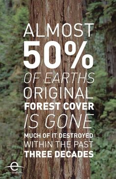 Cutting down the forests to raise cattle for your burger will kill your childrens grandchildren. Do you even care???