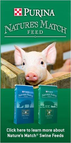 Raising Pigs Takes Sound Nutrition and Management Practices | Living the Country Life