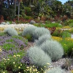 australian native gardens ideas - Google Search