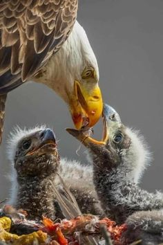 Beautiful Birds, Animals Beautiful, Beautiful Things, Baby Animals, Cute Animals, Eagle Images, Rare Birds, Lovely Creatures, Birds Of Prey