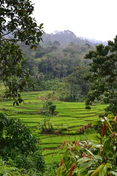 Sumatra, Indonesia...The most fascinating place I have ever been.