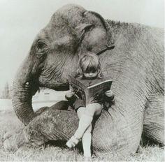 other elephant