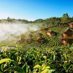 #Morning at #Green #Tea #Farm in #Thailand #Photo #Woods #Plants #Mountains #Nature #Travel #Hiking #Pictures #Rural #Trips #Traveling #Natur #Природа #Naturaleza #Natureza #自然 #Natura #Voyages #Reisen #Viagens #Viajes #Paysage #Landschaft #Paisaje #Montanas #Montagnes #Berge https://t.co/DkKAet2QNN