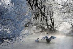 Swan song in Belarus's frozen utopia