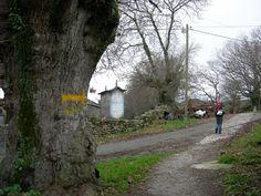 follow the yellow Country Roads, Yellow, Camino De Santiago