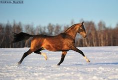 .what a stride on this horse