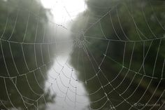 Die Raumfee: Herbstmorgenfreudentränen. Spinnennetze an einem nebligen Oktobermorgen // Cobwebs on a misty October morning