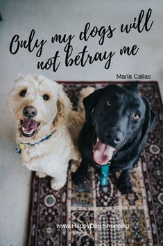 If you want to stop your dog from peeing in the house, check out these puppy and dog potty training and house breaking tips to keep your dog from urinating on your carpet or floor. Labrador Retrievers, Retriever Puppies, Dog Pee Smell, Training Your Dog, Potty Training, Training Classes, Dog Barking, Old Dogs, Dog Quotes