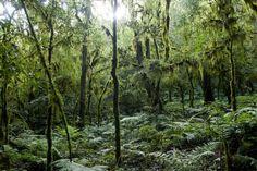 Parque Nacional Baritu - Salta