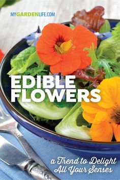 Fresh flowers aren't just for the table centerpiece anymore; they're part of the main course! Edible flowers, like pansies, calendula and nasturtium, are part of a hot trend this season. Check out these garden flower favorites you can add to your favorite recipes. #MyGardenLife #EdibleFlowers #EdibleFlowerGarnish #flowers #GardeningIdeas Edible Plants, Edible Flowers, Chive Blossom, Easy Recipes, Easy Meals, Leafy Salad, Tasty, Yummy Food, Creamy Cheese