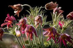 Red Flower  Flowers  Blossom