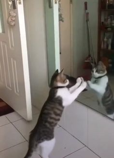 Ideas Funny Animals Gfs Dance For 2019 Funny Animal Memes, Funny Cat Videos, Cute Funny Animals, Funny Animal Pictures, Cute Baby Animals, Funny Cute, Funny Dogs, Funny Humor, Funny Stuff