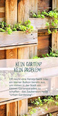 Du hast Lust auf frische Kräuter und knackiges Gemüse aber keinen Garten? Kein Problem, denn selbst auf Fensterbänken und Stadtbalkonen lassen sich wunderbar Pflanzen ansiedeln. Urban Gardening heißt der neue Trend, der zum gesunden und nachhaltigen Lifestyle beiträgt. Auf Fensterbänken kannst Du Kräuter oder Wildblumen für Bienen anpflanzen. Balkone bieten die Möglichkeit, Tomaten, Buschbohnen und Paprika gedeihen zu lassen. Alle Tipps in unserem neuen Blog! #edel-naturwaren.de Gras, Gardening, Plants, Edible Plants, Calendula, Large Backyard, Wildflowers, Planting, Lawn And Garden