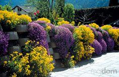 svahové záhrady prírodné - Hľadať Googlom