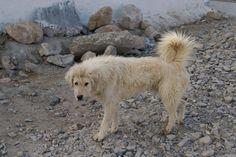 Aumentan los abandonos de animales en primavera   Cuidar de tu mascota es facilisimo.com