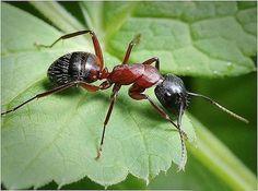 Как избавиться от муравьев на садовом участке.   Дачники Summer House Garden, Small Farm, Garden Crafts, Garden Ideas, Ants, Bee, Animals, Ideas Geniales, Reptiles