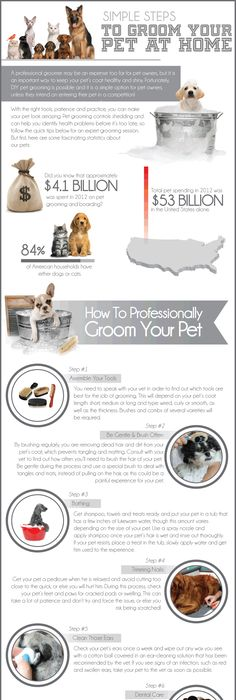 Best name ever for a pet grooming salon favs for laughs dog grooming at home simple steps guide infographic dog grooming solutioingenieria Choice Image