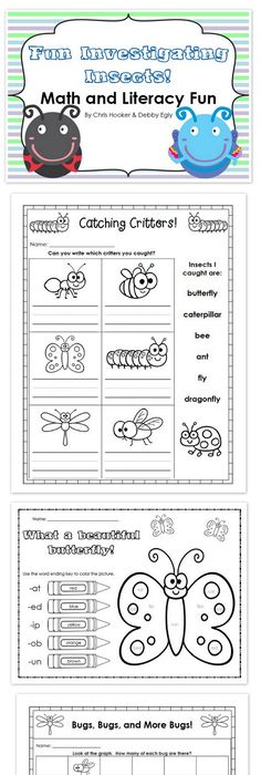 My Insect Report  Template Students And Bodies