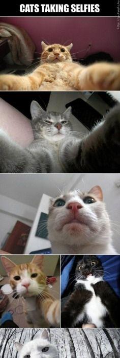velká kočička selfies