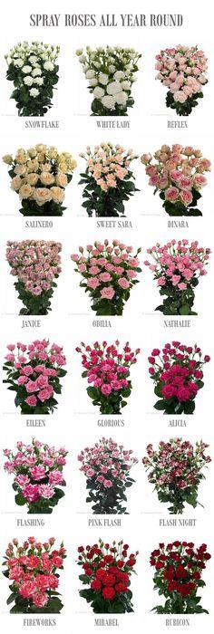 bedeutung der farbe von rosen blumen pinterest bedeutung der farben rose und farben. Black Bedroom Furniture Sets. Home Design Ideas
