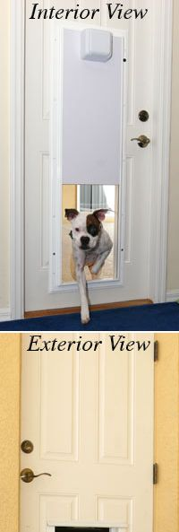 Dog doors dog and owner reprievepictures of dogs and all about dog dog doors dog and owner reprievepictures of dogs and all about dog in dog door for sliding glass door build a dog door for sliding glass door pinterest solutioingenieria Gallery