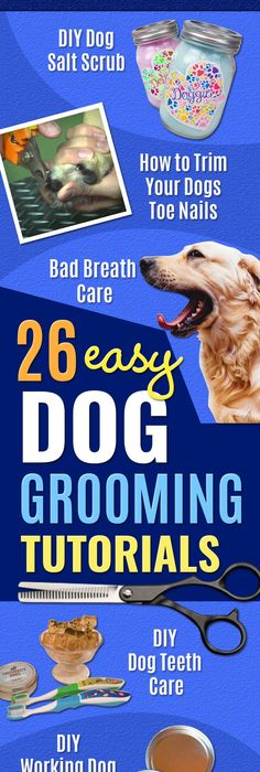 How to make your own dog ear cleaner pets pinterest ear 26 must see dog grooming tutorials solutioingenieria Choice Image