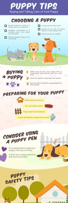 Free Puppy Sales Contract Template  WordDoc Sample  Dog Dog