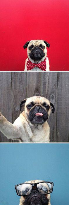 Wonderful Chubbie Chubby Adorable Dog - 1918b2b0da5af4190bb8cc0cdaef6f3f--pug-names-unusual-pets  HD_782559  .jpg