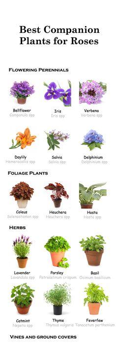 Simple Rose Garden: Simple Design Ideas Rose Garden Plans