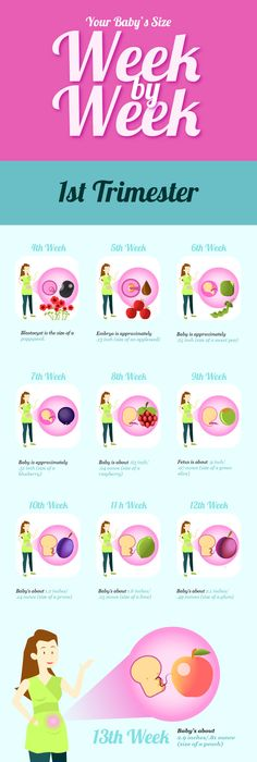 babys size week by week infographic