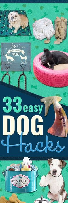 Dog hacks smart diy ideas for dog owners all about your dog 33 dog hacks you need to try today solutioingenieria Images