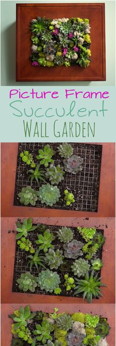Create Your Own Picture Frame Planter Blooming With A Mosaic Of Live  Succulents And Moss.
