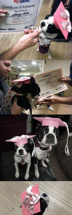 Wonderful Graduation Cap Black Adorable Dog - 3d847d8e481ebbbe74b922f05c3fb2cc--thin-ribbon-graduation-caps  Pic_2510046  .jpg